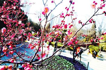郑州各大公园春绽枝头
