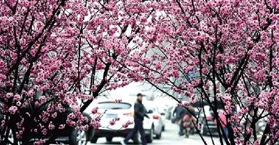 郑州春游公交地图出炉 赏花踏青吃烧烤样样全