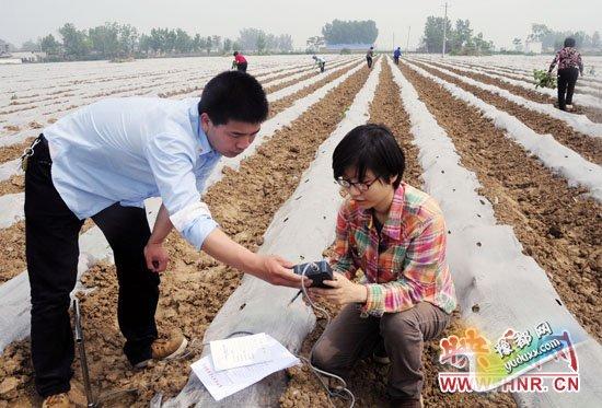5月15日,宝丰县农气人员正在石桥镇500目连片烟田开展土壤墒情调查。