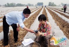 宝丰县农业气象人员进烟田调查土壤墒情(图)
