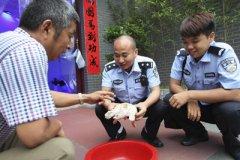 信阳新县惊现罕见白色野生甲鱼