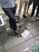 公司招聘美女大学生 称现场亲鳄鱼奖千元(图)