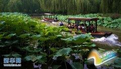 北京:荷花盛开游人来