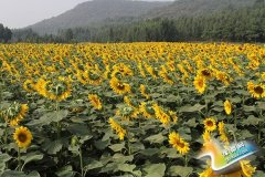 思礼镇大力发展休闲观光农业  促进百姓增收致富