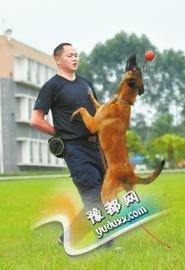 训练警犬高空接物。
