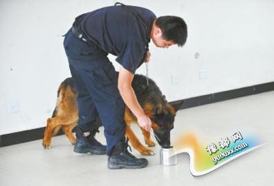 警犬接受气味鉴别训练。