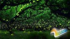 七夕佳节恰逢周四 景区夜游受情侣们的青睐
