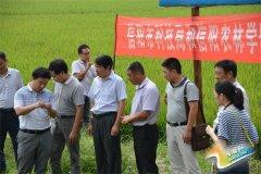 市科技局、信阳农林学院一行到我县开展送科技下乡活动