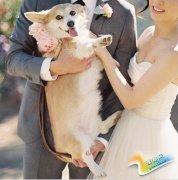 本周INSTAGRAM上最受喜爱的婚礼照片