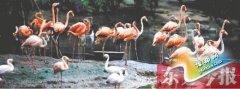 郑州市动物园众筹而生30年 全国十佳动物园之一