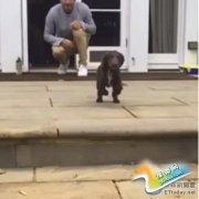 """贝克汉姆家的狗就是不一样!一跳秒变""""小飞象"""""""