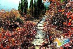 第二届荆紫仙山金秋红叶节将于10月18日隆重开幕