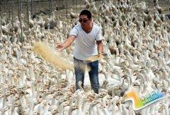 王景坡的绿色创业梦 带领村民走致富路