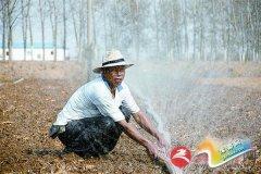小麦播种早   抗旱保出苗