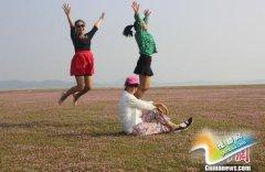 鄱阳湖逼近10米枯水线 蓼子花海奇观引游客