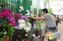 郑州绿博园蝴蝶兰展将持续到11月12日