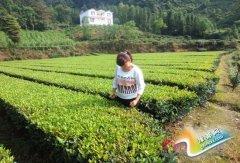 白果乡女能人:实体创业带领村民致富