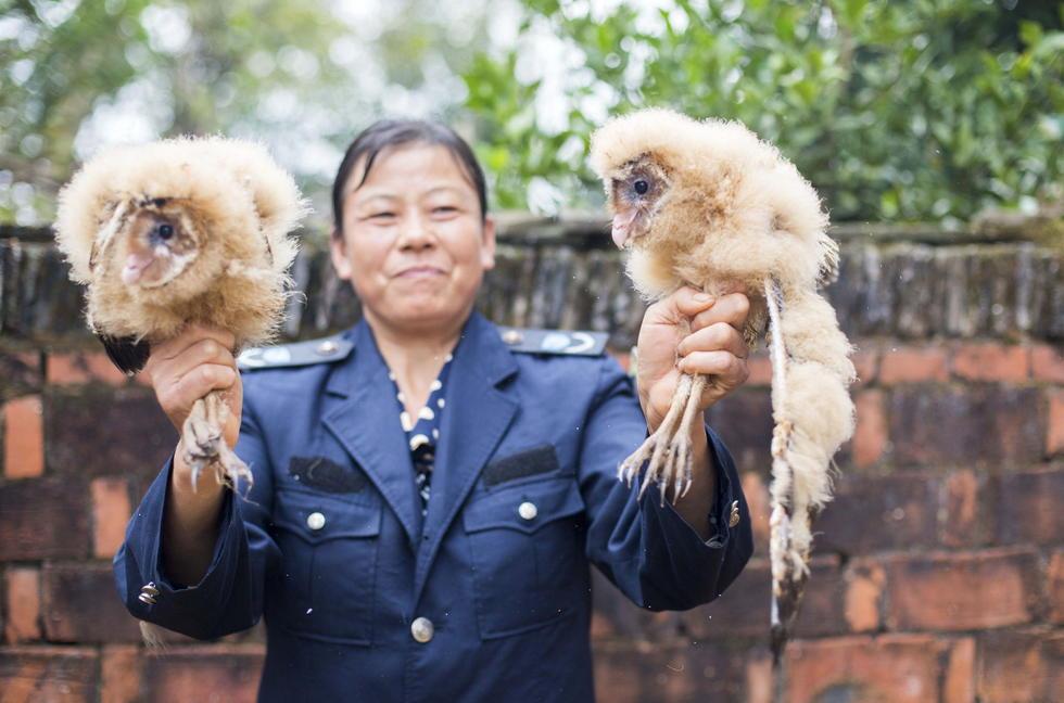11月6日,记者联系上都昌县的村民危亿玲,她是捡到雏鸟的曹女士的儿媳。她向记者介绍,称他们家住在蔡岭镇北炎村港边舍自然村,她婆婆11月4日下午上山采茶籽时,在树下发现了5只可爱的雏鸟并带回了家。