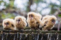 村民捡到五只猴面鹰 系国家二级保护动物
