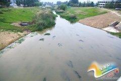 """高标准建设生态水系 让郑州""""水通、水清、水美"""""""