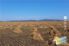 80后千万富翁微信卖大米,在东北包下了3000亩地!