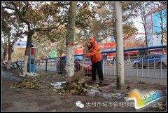 市行政执法局环卫处及时清理落叶保道路整洁