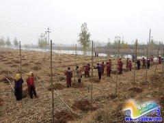 我县掀起冬季造林绿化高潮