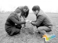 渑池:农技服务到田间 技术指导面对面