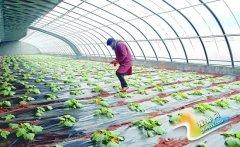 义马:循环农业效益高