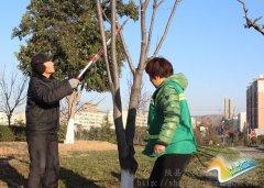 甘棠公园加强冬季花木管护