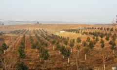 全县造林绿化暨烟叶生产工作现场会在余关乡召开