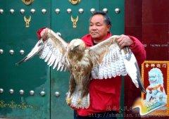 宫前乡村民:救助国家二级野生保护动物大�\获赞赏