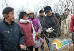 淅川教授为林农送技术