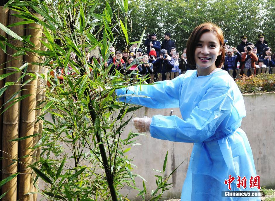 """1月17日,""""'UNDP(联合国开发计划署)形象大使'全球征名暨'UNDP熊猫使者'全球招募活动""""在成都正式启动。启动仪式上,知名演员袁姗姗作为此次UNDP的熊猫明星使者出席活动并致辞,她希望大家能共同参与到公益活动中来,一起热爱大熊猫、保护濒危野生动物,并呼吁大家一起行动起来,不论是亲自投身到保护大熊猫的队伍里还是一次公益的微博转发,都是参与的一种方式。安源 摄"""