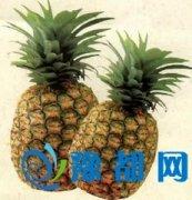 吃菠萝的好处和坏处分别是