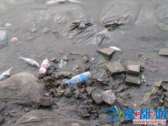 龙亭大殿主干道西侧龙亭湖岸边,死鱼、空饮水瓶大煞风景。