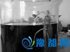 北京:市民家人参泡60度白酒8年后开出白花(图)