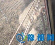 西安火车碾死90只羊 现场触目惊心