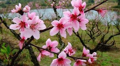 郑州赏桃花来这5个地方 附最全自驾路线
