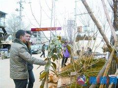 村民购苗忙植树