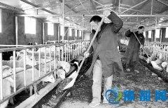灵宝:发展生态观光农业 带动农民致富