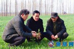 遂平县褚堂乡农业技术人员指导群众管理麦田