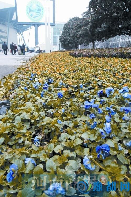 郑州6条路绿化看齐上合标准 每周至少冲洗两次