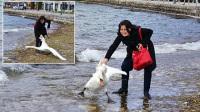 女游客狂拽天鹅拍照惹争议 天鹅一命呜呼