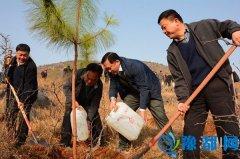 淅川:开展义务植树活动