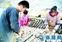 灵宝市尹庄镇前店村:小香菇成就大产业