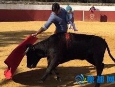 斗牛士抱着孩子斗牛被批不负责任 让人感到难受