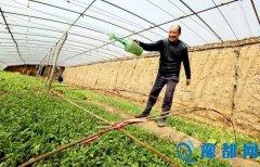 三门峡交口乡发展蔬菜合作社带动村民致富
