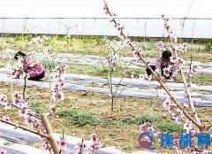 汝南县板店乡呈现一派美丽田园风光