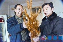 记农业科技专家吴长城